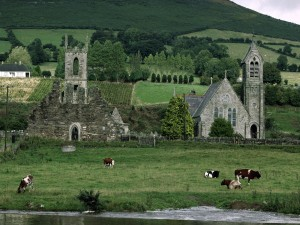 Vacas pastando en la orilla del río