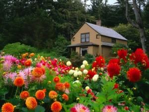 Cabaña en el bosque rodeada de flores