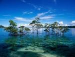 Árboles en la laguna