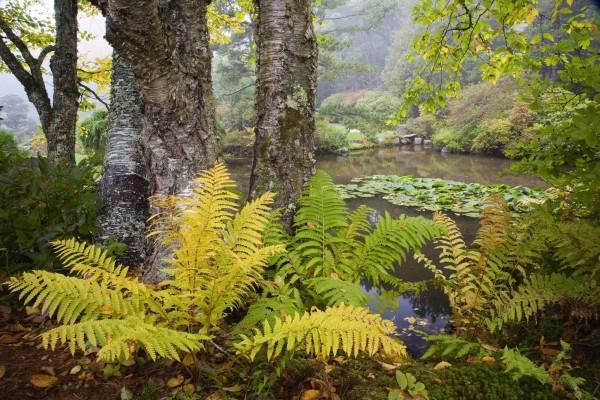 Vegetación a la orilla de un río