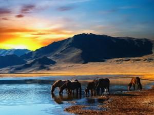 Caballos salvajes bebiendo en la orilla