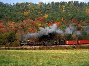 Tren a vapor rodeando un bosque