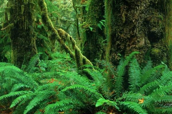 Helechos y troncos musgosos