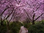Floración lila
