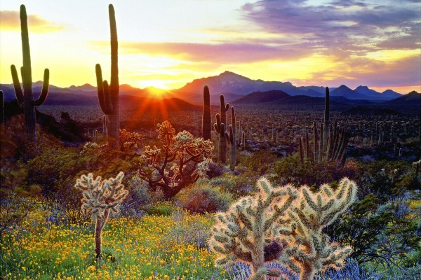 Un desierto de cactus y flores
