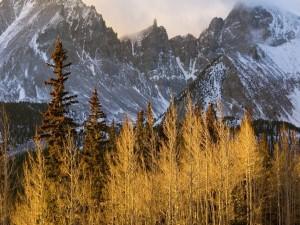 Vegetación de alta montaña