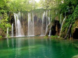 Salto de agua en el bosque