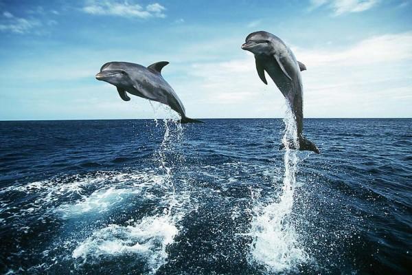 Delfines saltarines