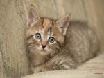 Gatito camuflado