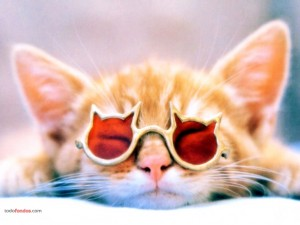 Gato con gafas de sol gatunas