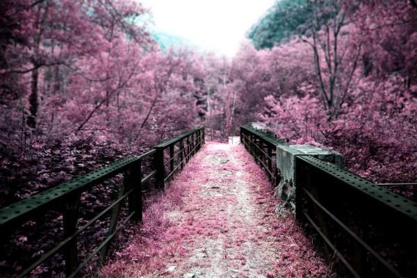 Puente teñido de vegetación violácea