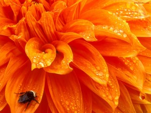 Postal: Insecto en flor naranja