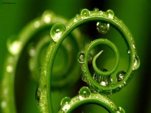 Tallo espiral