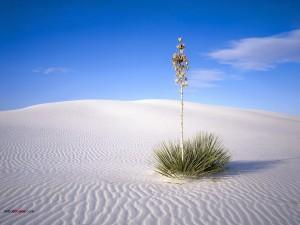 Postal: Una planta en la arena blanca del desierto