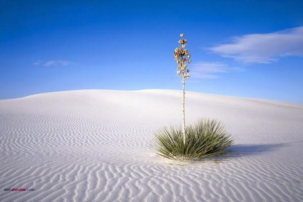 Una planta en la arena blanca del desierto
