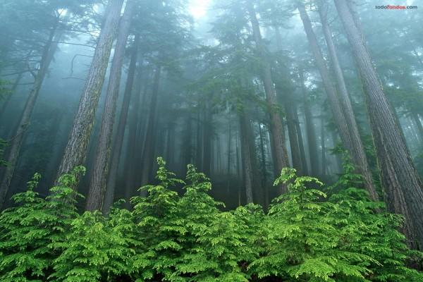 Un bosque de árboles muy altos