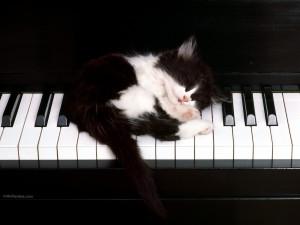 Postal: Gatito sobre teclado de piano