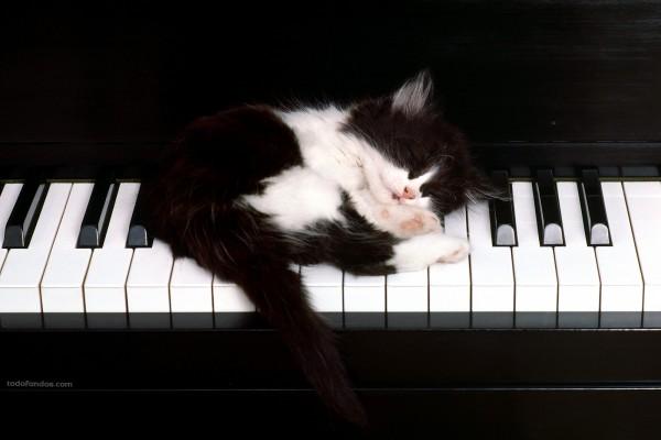 Gatito sobre teclado de piano