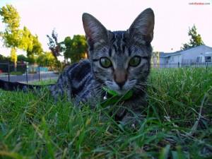 Un gato en el césped