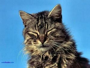 Gato con los ojos cerrados