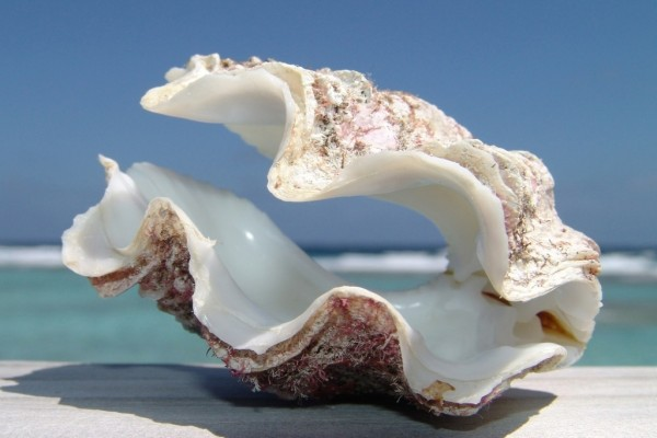 Una concha marina