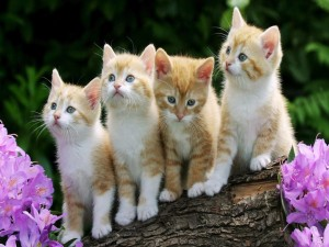 Una camada de gatitos rubios