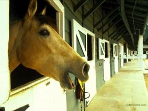 Un caballo en el establo
