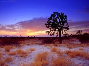Puesta de sol en Joshua Tree, Desierto de Mojave, California