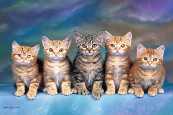Cinco gatitos, atentos y obedientes