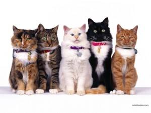 Postal: Cada gato con su cascabel