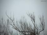 Ramas en la niebla