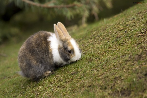 Conejito triscando hierba