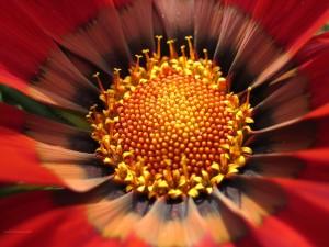 El interior de una flor