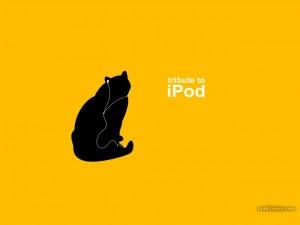 Gato con iPod