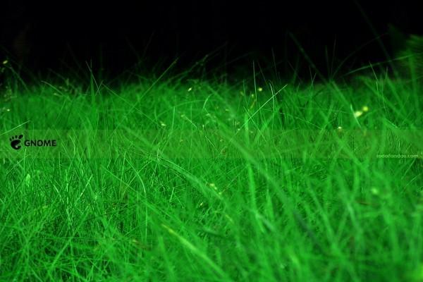 GNOME sobre hierba