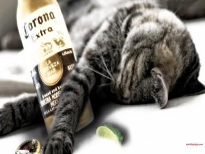 Este gato se tomó una Coronita