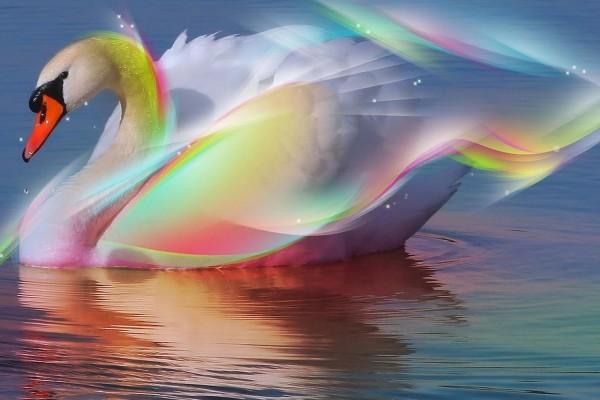 Cisne arcoíris