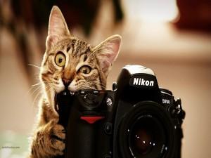 Postal: Un gato fotógrafo