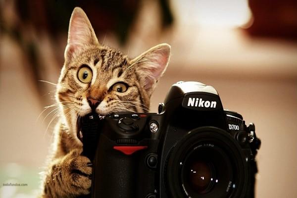 Un gato fotógrafo