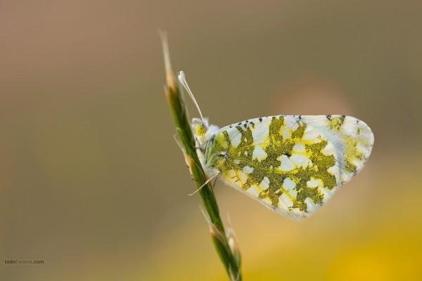 Mariposa de colores verdes y blancos