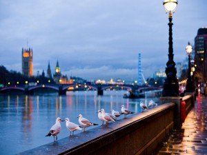 Postal: Gaviotas en Londres