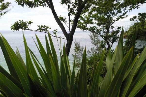 El mar tras la vegetación