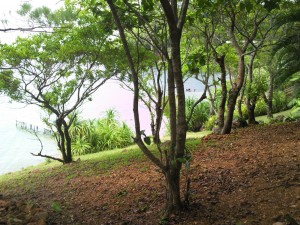 Postal: Vegetación en Isla Guanaja (Honduras)