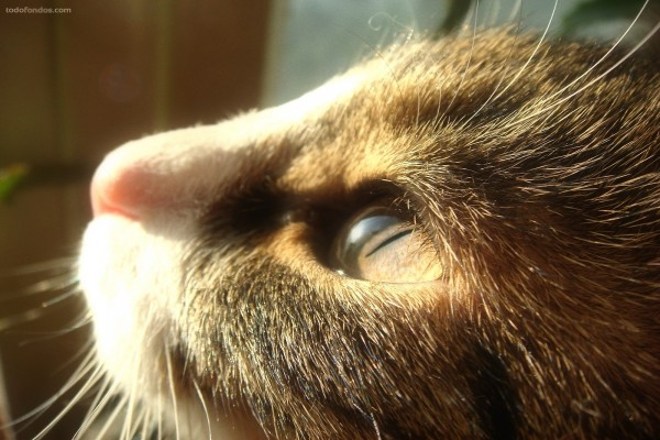 Gato mirando al sol