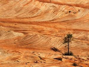 Postal: Árbol surgido de la piedra