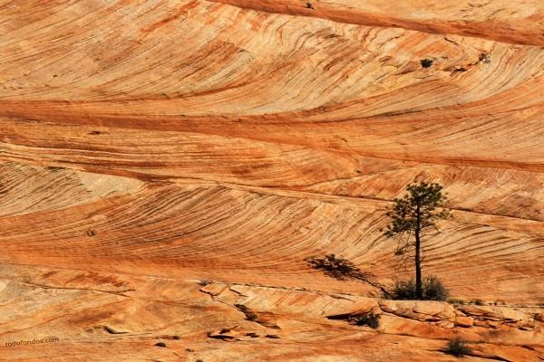 Árbol surgido de la piedra