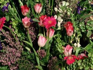 Algunas flores silvestres