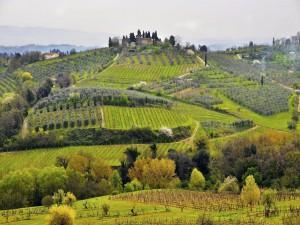 Viñedos en la Toscana, Italia