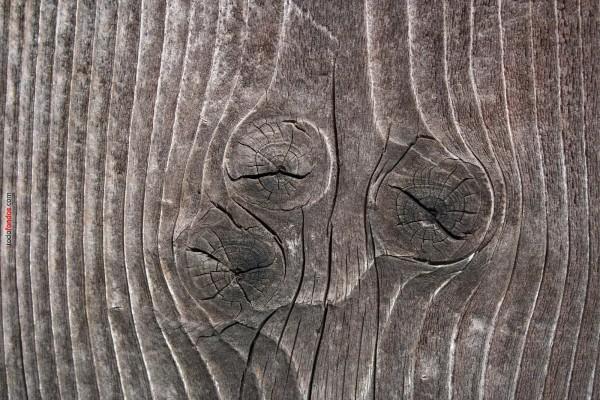 Nudos en el tronco de un árbol
