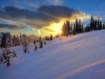 Amanecer en un bosque nevado